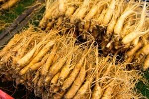 Ces racines fraîches de ginseng constituent-elles un danger pour la santé ?