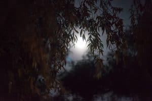 Vue d'une pleine lune à travers une forêt de saule qui donne envie de s'endormir rapidement